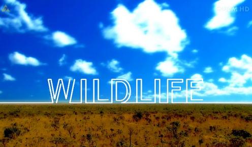 Tajemnice zwierz±t / Wildlife (2010) PL.TVRip.XviD / Lektor PL