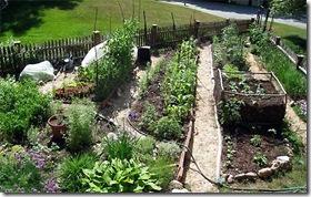 Daphne's garden
