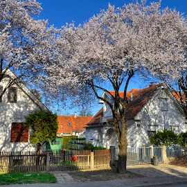 Spring in my neighborhood by Zeljko Kliska - City,  Street & Park  Neighborhoods ( street, zagreb, homes, spring, city )