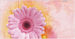daisy-pink-wallpaper.jpg