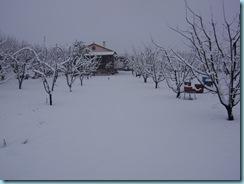 2009 01 03 Νάουσα Χιονόπτωση_008