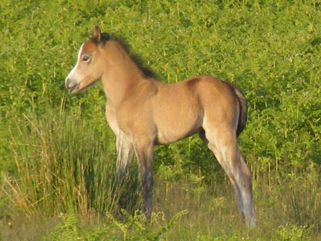 Amber's filly 09