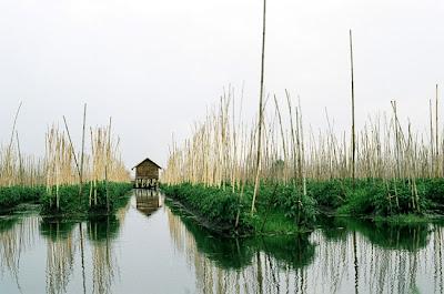 Inle Floating Garden