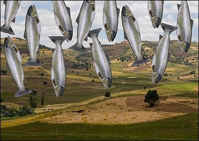 ethiopia-fish-431x300