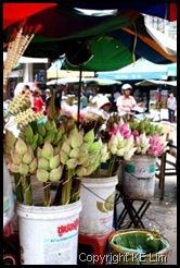 Lotus flowers_com