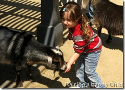 Apr15_Goats