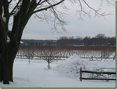 Jan 2011 Shinn  Vineyard view 043