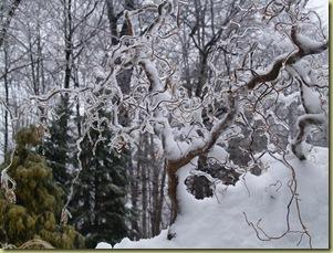 Feb 2011 snow 007