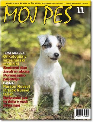 revija Moj pes- Parson russell terrier(oktober 2009)