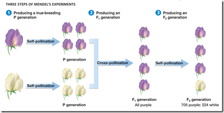 Genetika : Hukum Mendel