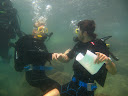 A wedding proposal on a dive in Tel Aviv