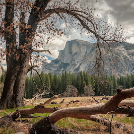 Half Dome Framed by a Tree by Kevin Brown - Landscapes Prairies, Meadows & Fields ( half dome, california, meadow, yosemite national park, spring )