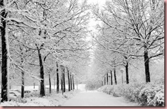 Winter_by_marquis73