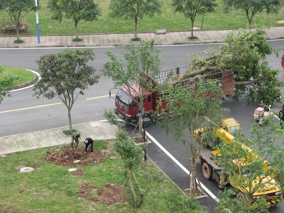 Importation d'arbres