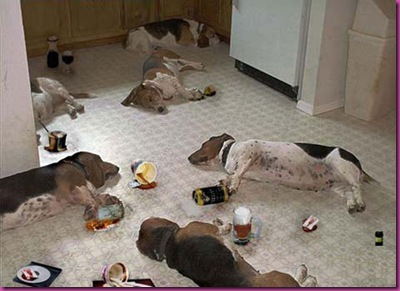 Dogs_Drunk