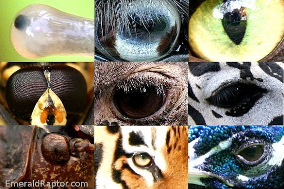 oftograf 5: kropp - øyne