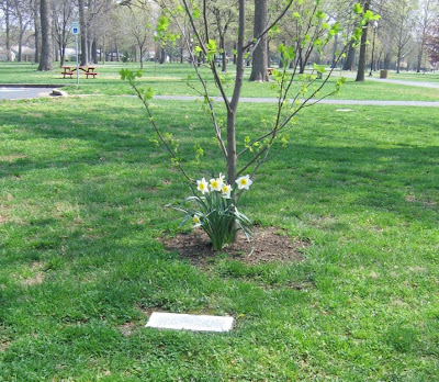 tree honoring boy who saved little brother