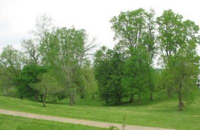 Clear Creek Park arboretum
