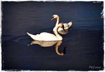 Svanesjø 6