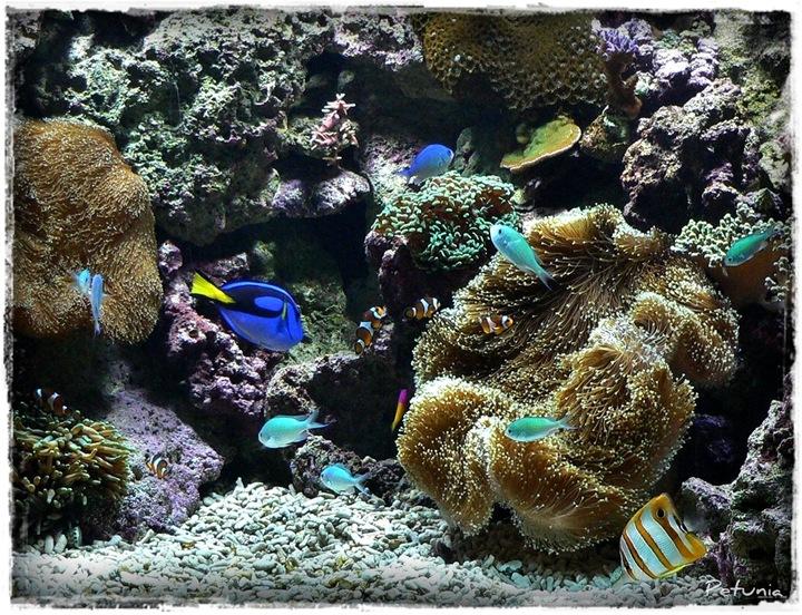 Akvariet 3