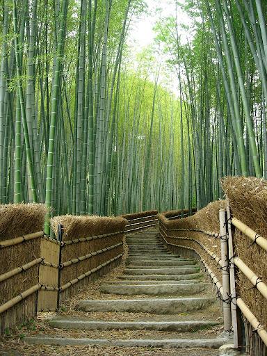 бамбук 4