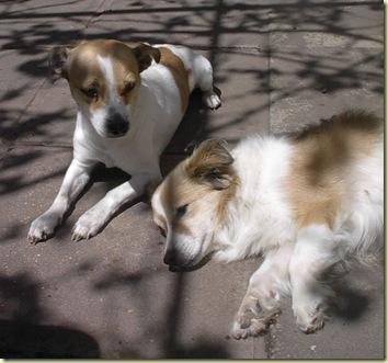 Coco y Braulio