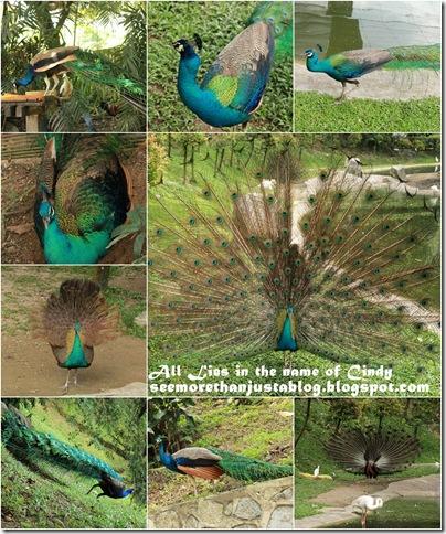 Bird Parkpage1-20101113
