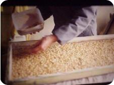 tratamiento-de-la-semilla-para-hidroponia