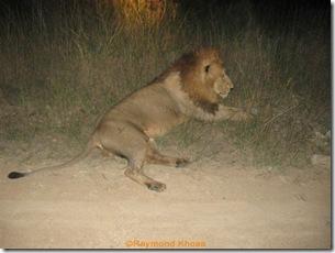 Leopards sightings 132
