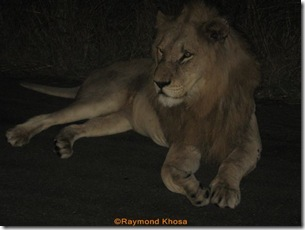 Africa 008