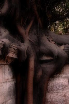 blog__delhi_tree.jpg