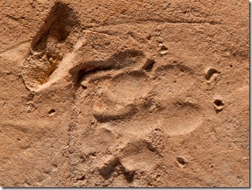 Dog print in Roman tile, IAA