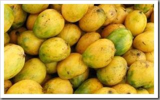 buah mangga masak