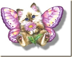 kitty butterfly