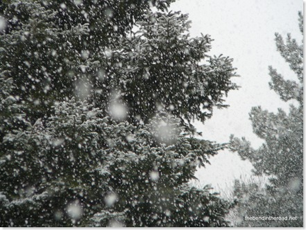 february snowflakes