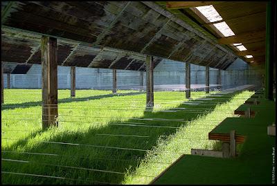 Foto: 50 Meter Kleinkaliberstände