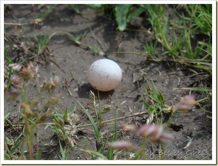 05-18-10 bird egg found 01