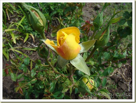 05-18-10 flowers 06
