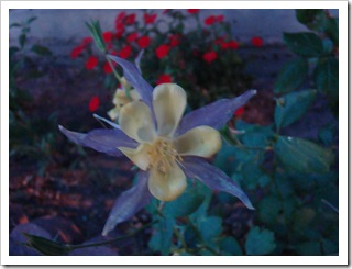 05-30-09 Flowers 09