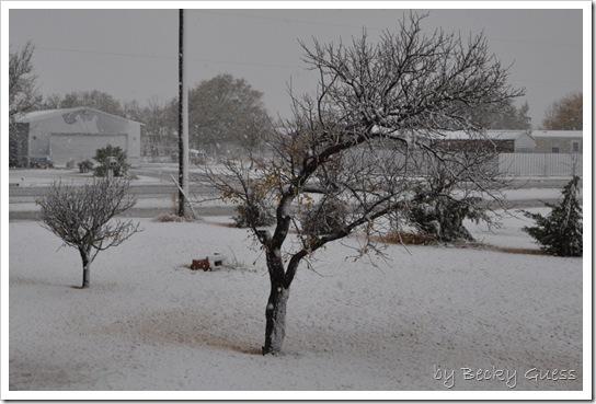 11-12-10 first snow 01