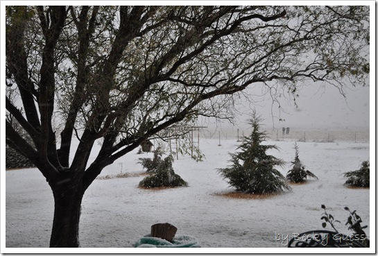 11-12-10 first snow 06