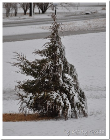 11-12-10 first snow 11