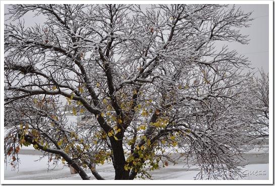 11-12-10 first snow 13