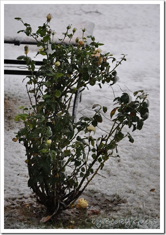 11-12-10 first snow 17