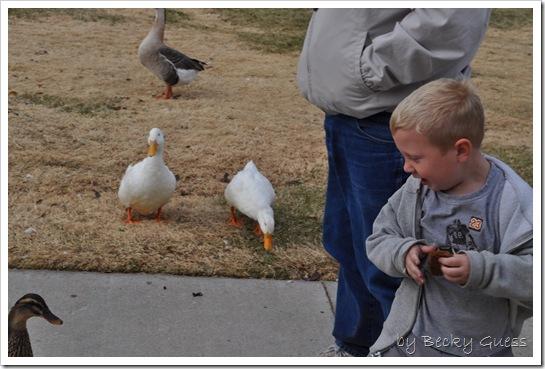 11-24-10 Feeding geese 07