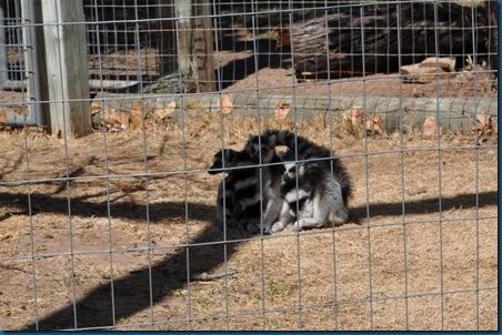 03-15-11 Zoo trip 05