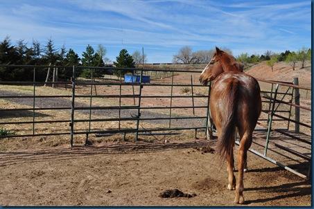 03-31-11 farm visit 98
