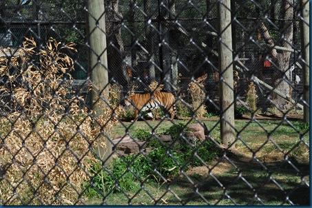 04-28-11 Zoo 039
