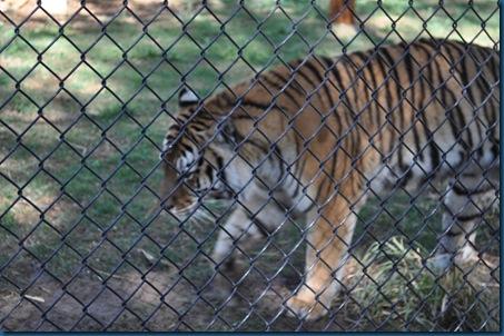 04-28-11 Zoo 041