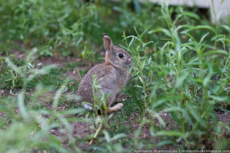 Кролики на зелёной травке